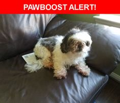 Is this your lost pet? Found in Richmond, TX 77407. Please spread the word so we can find the owner!  Description: Friendly female shih tzu around 7-9 years old. No collar and no microchip.. she was found in Lakemont in Richmond tx  Nearest Address: 20130 Terra Hollow Lane, Richmond, TX, United States