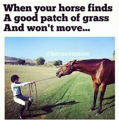 Or drops his head to eat without warning and you just about fall over... no I don't know what you mean ;) Equestrian Memes, Equestrian Problems, Horse Girl Problems, Horse Humor, Funny Horse Memes, Funny Horses, Horse Puns, Funny Horse Pictures, Horse Facts