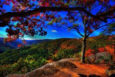 beautiful nature - Google 検索