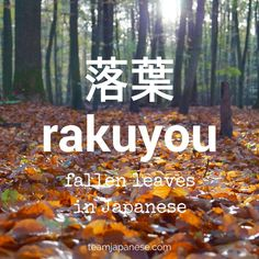 rakuyou - the Japanese word for fallen leaves. Seasons are very important in Japan. Japanese people honour the changing seasons with special food, drink, festivals and customs. And of course, there are special seasonal words too! Increase your Japanese vo Beautiful Japanese Words, Learn Japanese Words, Study Japanese, Japanese Culture, Beautiful Words, Learning Japanese, Japanese Travel, Japanese Quotes, Japanese Phrases