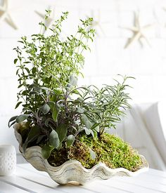 For a beachy take on potted herbs, try planting in a large shell. Learn how to: https://www.onekingslane.com/live-love-home/herb-garden-ideas/