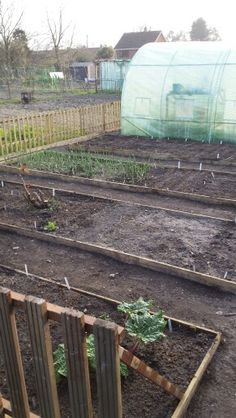 Starting from scratch. ALLOTMENT Apr  2015