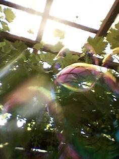 06.07.2015 J'adore! J'adore! J'adore! J'adore les surprises que me fait mon téléphone portable lorsque je m'embête à prendre des photos lorsque je fais des bulles de savon! C'est le jeu de l'été chez moi!!!