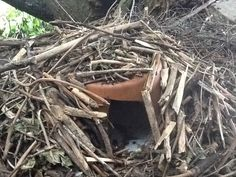 Hedgehog house good  idea for a nature loving person