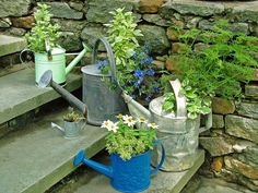 Watering Can Container Garden