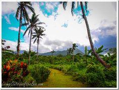 Walking to the Fuipisia Waterfalls in Apia, Samoa