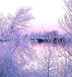 Snow covered trees surround a serene pond in Idaho.