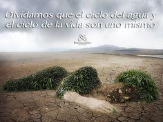 Olvidamos que el ciclo del agua y el ciclo de la vida son uno mismo.