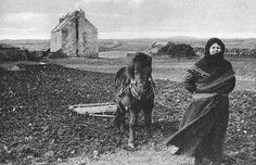 Old photograph of a Crofter Harrowing a field on the Shetland Islands of Scotland