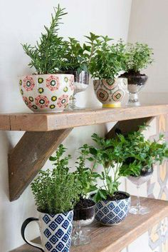 Cute idea for herbs in kitchen
