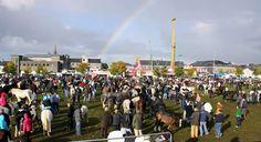"""IRLANDE: L'""""October Fair"""" de Ballinasloe est le plus gramde foire du cheval et du bétail. C'est la plus importante d'Irlande, mais aussi l'une des plus célèbres d'Europe. La foire dure une grosse semaine : animation garantie. Le premier dimanche, plus de 1 000 équidés cherchent preneur dans un immense champ."""