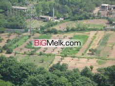 فروش باغ کشاورزی 7.5 هکتار