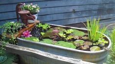 Old watering trough and hand pump well head become a fish pond with fountain