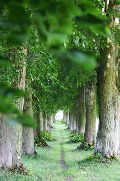 I would very much like to walk through here in complete silence.