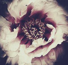 Mesmerising dark floral limited edition prints by Ashley Woodson Bailey | Flowerona