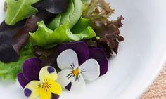 * Conoce las Flores Comestibles mas Comunes. – NATURAL DHARMA
