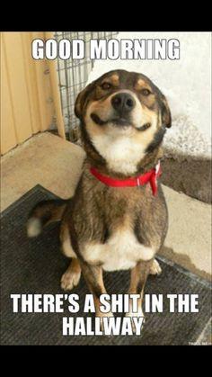 Dog pooo