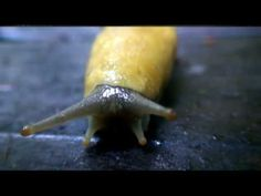 Break It Down with Bruce the Banana Slug with this weeks fun crafts and videos!!!