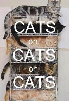 stacking cats