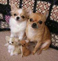 They adopted 2 stuffed pups.