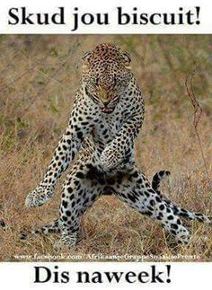 Funny pictures about He's Got Them Moves Like Jaguar. Oh, and cool pics about He's Got Them Moves Like Jaguar. Also, He's Got Them Moves Like Jaguar photos. Funny Animal Memes, Funny Animal Pictures, Funny Animals, Cute Animals, Crazy Animals, Beautiful Cats, Animals Beautiful, Big Cats, Cute Cats