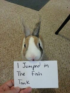 The bunny who swam with the fishes