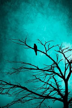 Bird on branch silhouette with a rich teal background