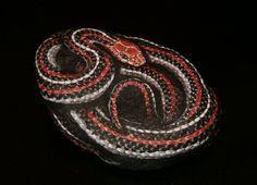 amylenore | Hand Painted Rock Art San Francisco Garter Snake by amylenore