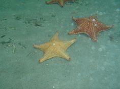 Boca del Drago, Bocas Town: Zobrazte recenze, články a fotografi z Boca del Drago na webu TripAdvisor.