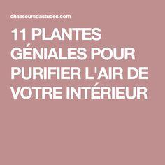 11 PLANTES GÉNIALES POUR PURIFIER L'AIR DE VOTRE INTÉRIEUR