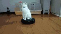 ネコに染められているとわかる16の変化 | CuRAZY [クレイジー]