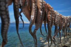 2. Mini-tripod  For close-ups that require steadiness beyond the capability of a human hand a tripod is your best friend. This shot of freshly caught octopus on Nisyros captures the essence of the Greek Islands: fishing and the sea.