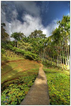 Le jardin botanique de Balata