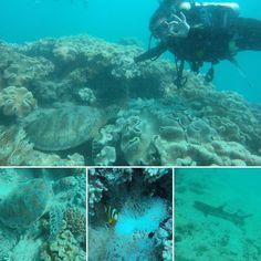#a #dream #comes #true #found #nemo #scubadiving #greatbarrierreef #diving #nowords #turtles #skarks #amazing #beautiful #love #the #ocean #cairns #australia @oceanfreeoceanfreedom by _raamonah__ http://ift.tt/1UokkV2
