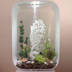 42 Stunning Aquarium Design Ideas for Indoor Decorations Nature Aquarium, Aquarium Fish, Biorb, Aquarium Design, Terrarium Plants, Large Plants, Freshwater Aquarium, Betta Fish, Tropical Fish
