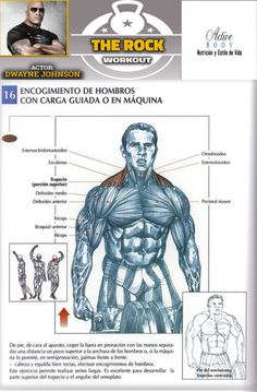 Encogimiento de hombros con carga guiada o en máquina Side Fat Workout, Biceps Workout, Health And Fitness Expo, Health And Fitness Articles, Sport Motivation, Gym Workout Videos, Gym Workouts, Gym Body, My Gym