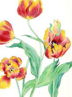 yellow and red tulips 3 | yellow and red tulips watercolour … | Flickr