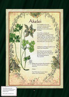 Akelei