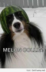 Melon Collie?