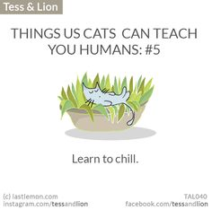 THINGS US CATS  CAN TEACH YOU HUMANS: #5 -  Learn to chill