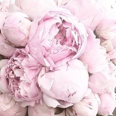 Can never have enough pink peonies!