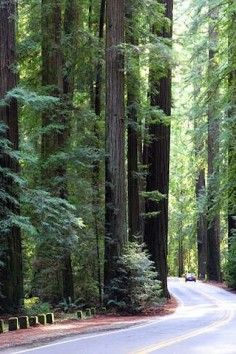 Humboldt Redwoods State Park 17119 Avenue Of The Giants Scotia, CA 95565 US