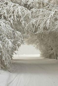 #snow #winter #invierno #nieve