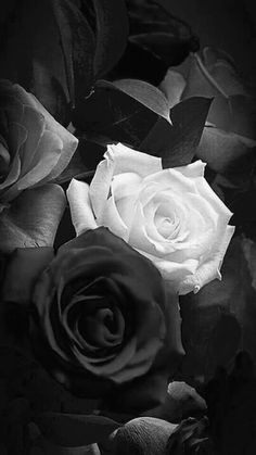 : Photo Post anything (from anywhere!), customize everything, and find and Black Rose Flower, Black And White Roses, Black And White Photo Wall, Beautiful Rose Flowers, Black And White Aesthetic, Blue Roses, Black And White Pictures, Black Flowers Wallpaper, Black Wallpaper Iphone