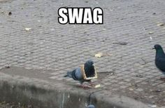 Pigeon's got game. - Imgur