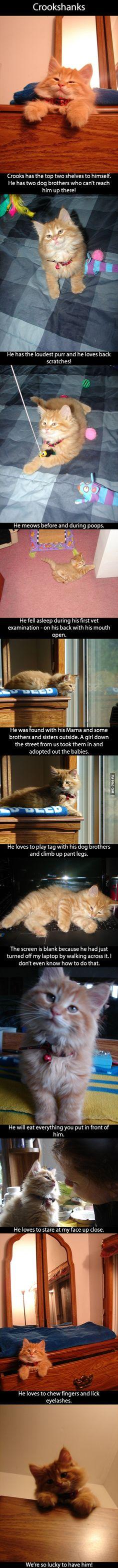 Crookshanks the kitten!