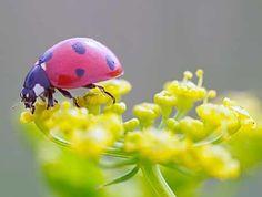 a happy bug!