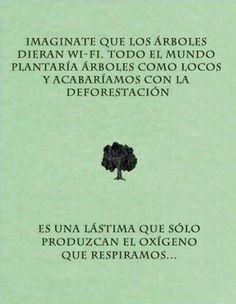 Cuida a los árboles