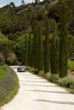 Bastide in Provence : Exteriors - Bastide de Marie : luxury property with hotel services in Provence (France) Luberon Provence, Provence France, Gravel Driveway, Driveway Ideas, Side Yards, French Countryside, South Of France, Landscape Design, Paths
