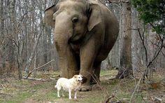 Pregnant Dog and Elephant